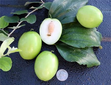 13 loại trái cây càng ăn càng nổi mụn - 8