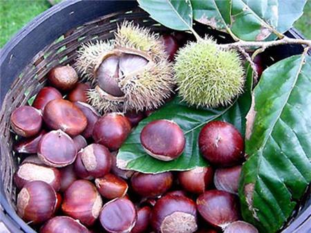 13 loại trái cây càng ăn càng nổi mụn - 10